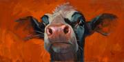 Koe rood © Theo Onnes